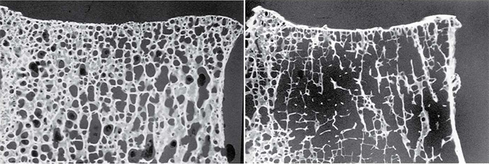 Cellular Materials Fig. 5.13